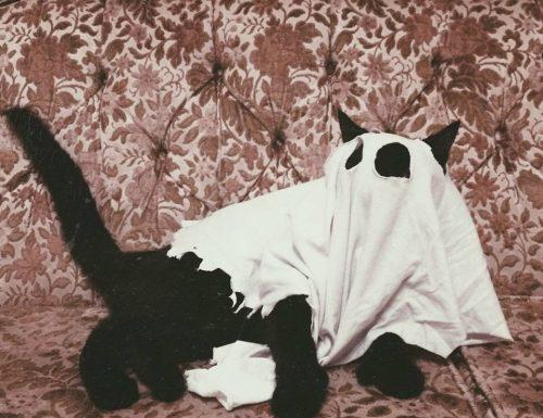 Valentino, il cane fantasma